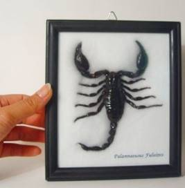 scorpio picture with hand