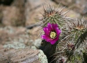cactus flower: capricorn moon