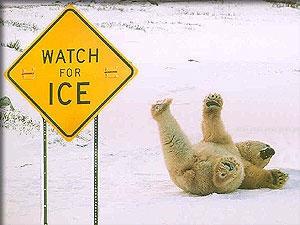 Polar Bear Slip