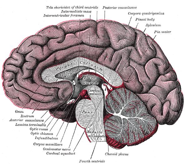 Mercury – My Brain!