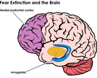 fear brain.jpg