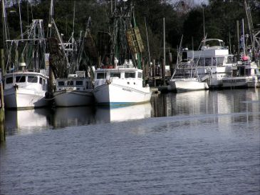 boats-in-harbor.jpg