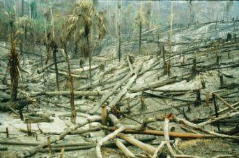 burned-forest.jpg