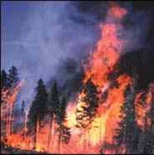 forest fire rage