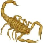 Dating Scorpio – The Nature Of The Deal