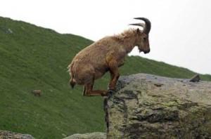 Capricorn goat balance