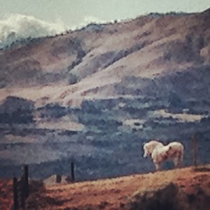 stallion landscape