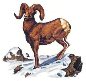 RAM dating Aries man op zoek naar dating profiel