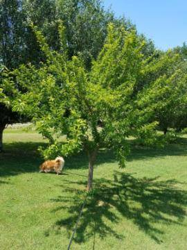 tree with dog