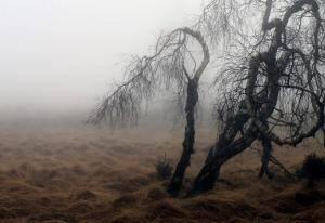 worst year fog